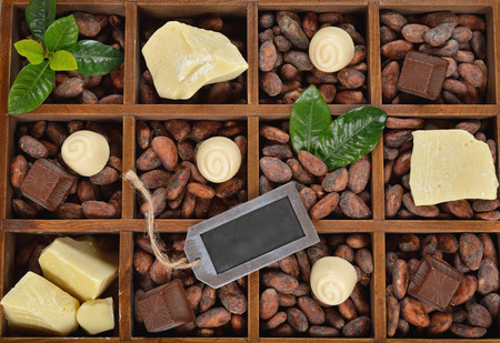 truffles: Chocolate truffles with natural ingredients Stock Photo