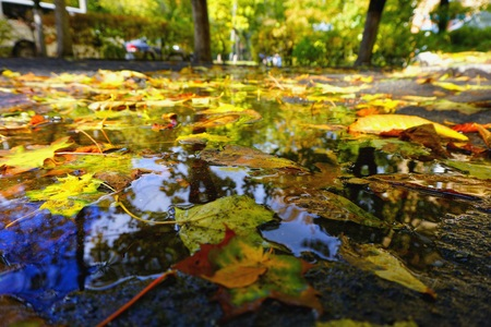 Autumn puddle with trees, sky reflections. Green yellow leaves lie on water surface. Sunny golden autumn weather. Stock Photo