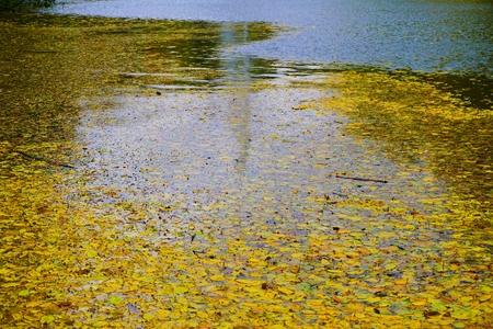 Park Sofiyivka (Sofievka), Uman, Cherkasy region, Ukraine. Yellow leaves float on the water surface, fontain reflection. Reklamní fotografie