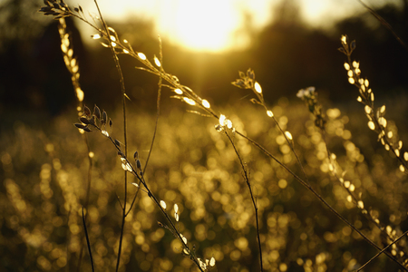 Sunny field with little bright flowers and dry shining grass at sunset time in golden autumn. Reklamní fotografie