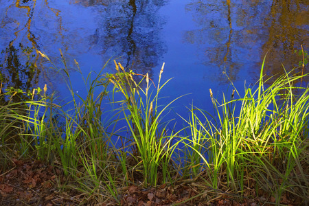 Forest reflection in water surface.  Colors frame: yellow, blue, green. Spring evening warm weather.