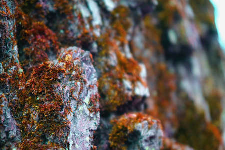 Red orange moss texture on bark tree background Stock Photo