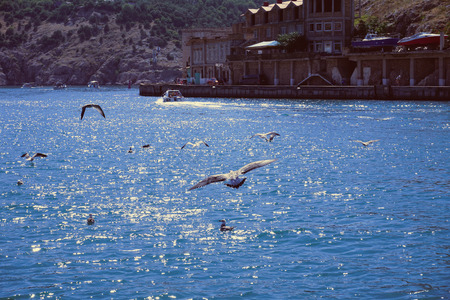 Black sea with maritime birds - gulls, cormorants. Pleasure boat with tourists. Many seagulls fly and catch fish