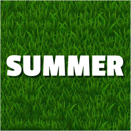 Fresh summer background with grass. Nature spring, summer backgrounds. Vector illustration.