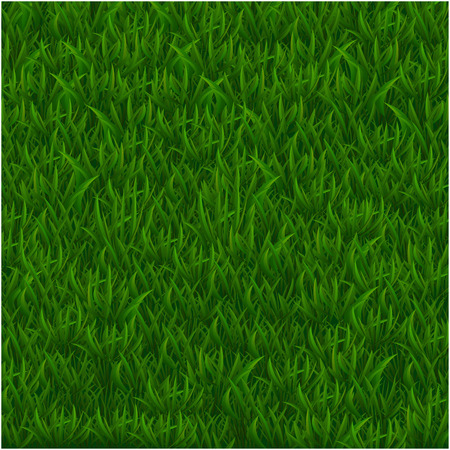 Green grass realistic textured background. Vector illustration