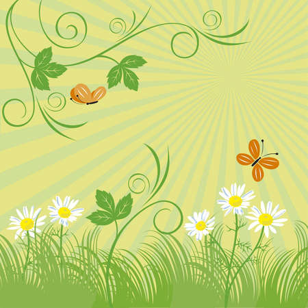 blossoming: Pattern from leaves, chamomiles, butterflies on a blossoming green meadow