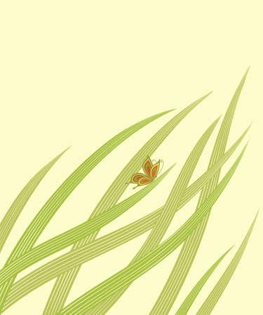 graceful butterfly has sat down on a green grass
