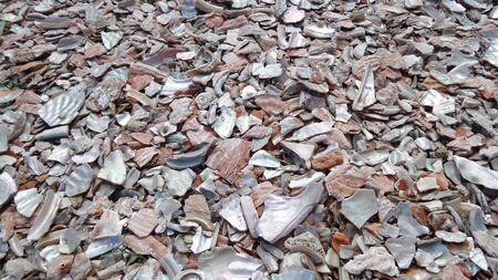 oyster shell: Oyster shell, background texture, crushed shells