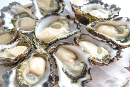 Freshly shucked Sydney Rock Oyster