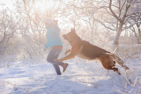 herrin: Deutsch Shepherd mit Spielzeug und seine Geliebte im Winter sonnigen Tag. Mädchen geht ihr Schäferhund oder Hund auf den Hintergrund einer verschneiten Wälder oder Sträucher mit Raureif und Frost bedeckt.