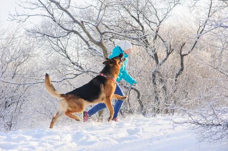 herrin: M�dchen erzieht ihren Sch�ferhund. Deutsch Shepherd mit Spielzeug und seine Geliebte im Winter sonnigen Tag. M�dchen geht ihr Sch�ferhund oder Hund auf den Hintergrund einer verschneiten W�lder oder Str�ucher mit Raureif und Frost bedeckt. Lizenzfreie Bilder
