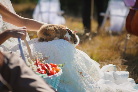 lap of luxury: Young woman bride holding cute rabbit on lap. luxurious wedding dress.