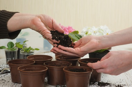 earth handful: Old woman giving young girl handful of earth. Planting houseplant indoors. Stock Photo