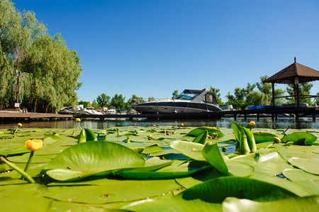 waterlillies: Blossoming Water-lily. Yellow Water lily on river. Boat in background. Stock Photo