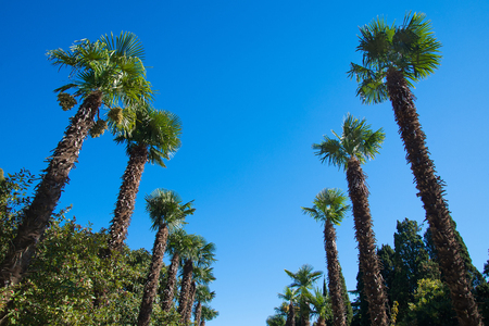 Two row palm trees against the sky Stock Photo