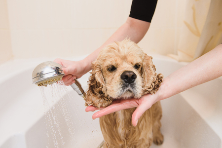 Dog is taking a shower at home Stock Photo