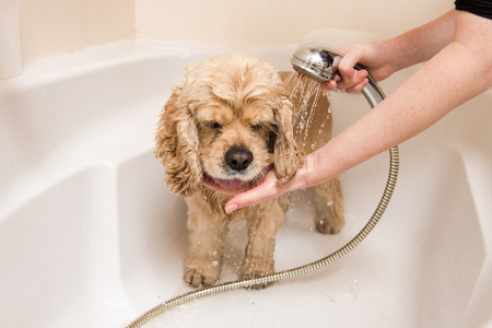 A dog taking a shower