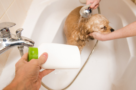 Dog at grooming salon having bath. Stock Photo