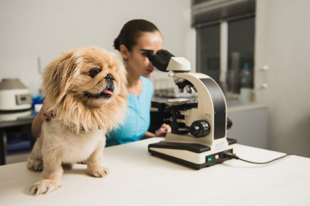 Female vet with microscope