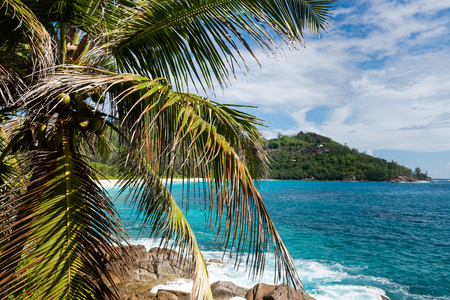 Indian ocean coastline with coconut palm tree, stones. Wind and waves. Beautiful green lagoon view at Seychelles island. Reklamní fotografie