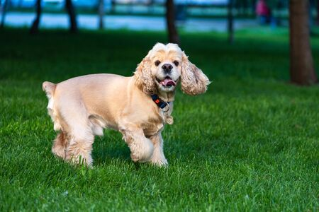 Cute dog jump in grass and play