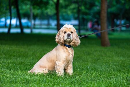 Cute offended dog muzzle sit at grass 写真素材