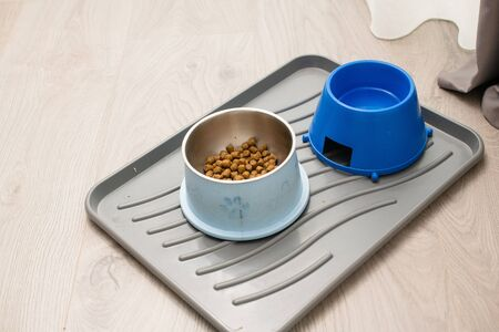 Plastic clean tray with two big bowls for animal pet dog full of granulated dry meal food and water at home floor