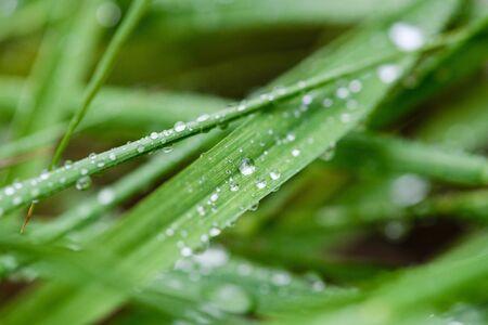 Water drops at fresh grass close up Stock fotó