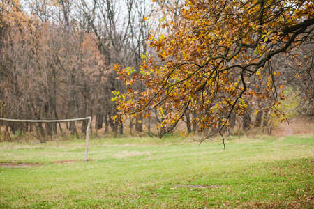 Serene landscape with orange dry foliage on trees, meadow with green grass, woods and nobody Stok Fotoğraf