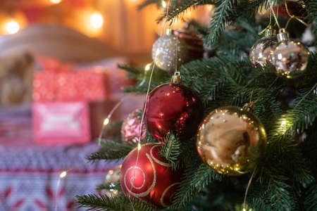 Christmas and New year eve fir tree with ornaments decoration of red and golden balls with gift boxes at background