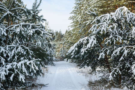 Winter forest road between trees with snow