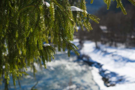 Beautiful evergreen fir pine tree hanging branches at snowy winter nature forest background at sunny day