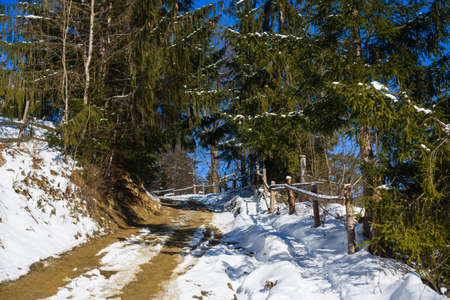 Slope pathway going up in winter mountain forest with snow, fir pine trees on sides and wooden fence at sunny cold day 스톡 콘텐츠