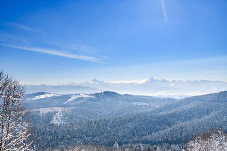 Scenic open winter view of Carpathian ukrainian mountains with snow mist, endless forest, frozen trees and blue sky
