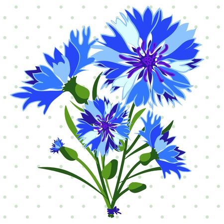 Cornflower. Vector illustration. Flowers isolated on white background.