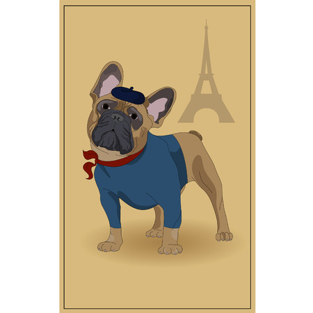 dog costume: French Bulldog, and symbols of France. illustration.
