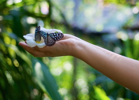 hands with a flower and two butterfly photo