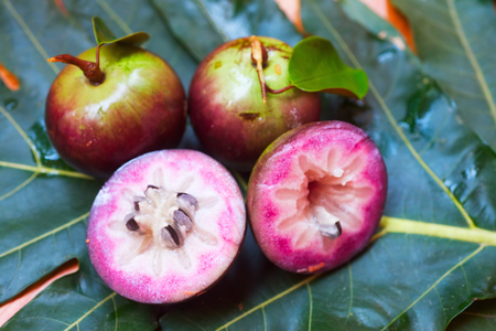 Cainito apples on green leaf  Stock Photo