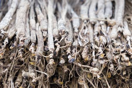 Trockene Ginseng-Wurzeln auf Hintergrundnahaufnahmefoto Standard-Bild - 91739835
