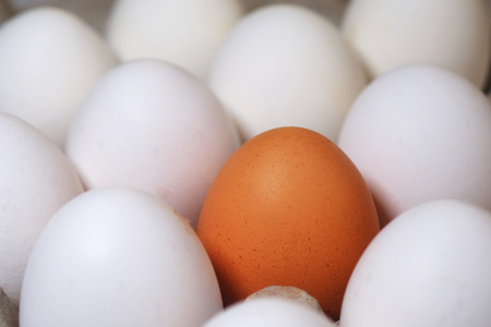 Among all white eggs, one colored egg in the tray Standard-Bild - 94718900