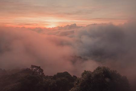 Früher Sonnenaufgang über dem Regenwald Standard-Bild - 93118453