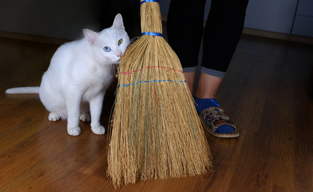 White cat assistant for Cleaning and sweeping room use broom Standard-Bild - 93410302