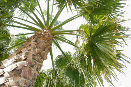 One one the Palm tree on the sky background Standard-Bild - 101432109