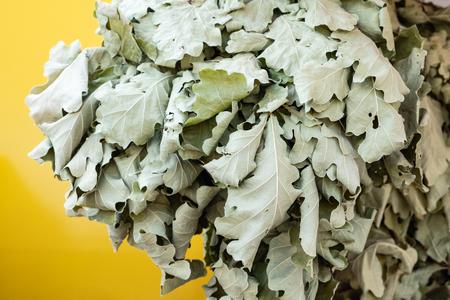 Dried oak leaves - a broom for a bath closeup photo Standard-Bild - 108230311