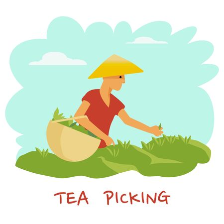A man in a hat with a basket in his hands is harvesting a tea leaf. Vector illustration Illustration