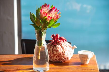 Protea sunny flower on the table in the room