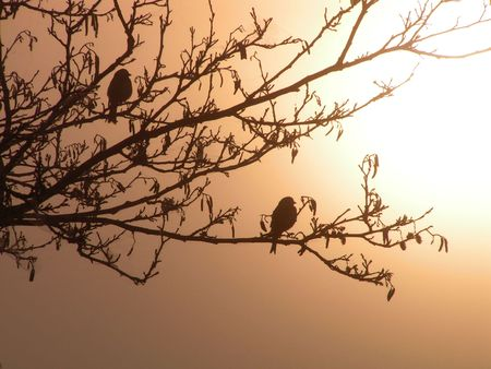 Meeting a dawn. Two birdies sit on a branch of a tree about the river.  Back illumination. photo
