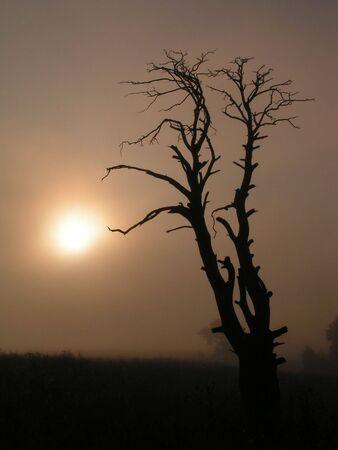 earlier: Dry tree. Earlier foggy morning.
