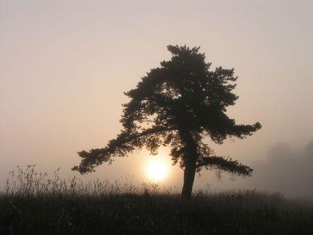 earlier: Silhouette of a tree. Earlier foggy morning.