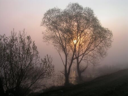 earlier: The embraced trees. Earlier, foggy morning near lake.